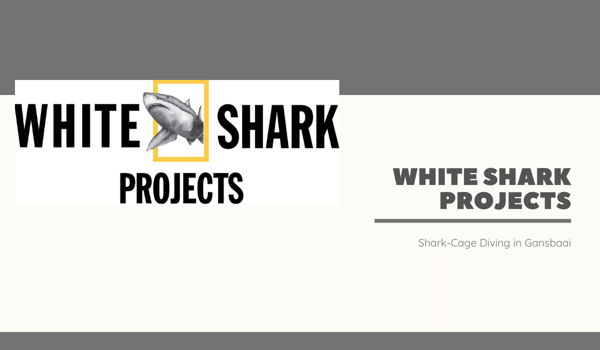 White Shark Projects - web